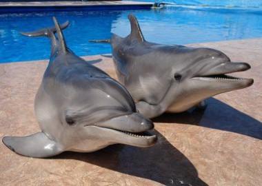 Дельфинарий — Симорон всея Планеты