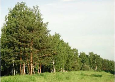 Деревья-лекари — Симорон всея Планеты