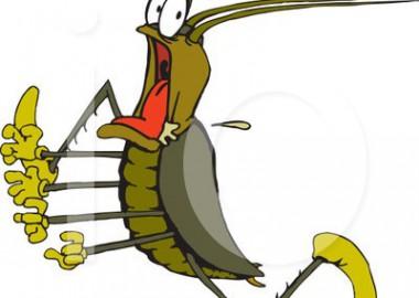Симоронская техника «Беременный таракан»